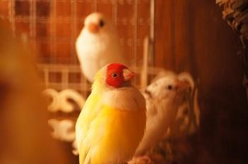 今年初の鳥写真だぞ